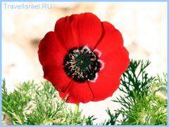 Израиль, природа Израиля